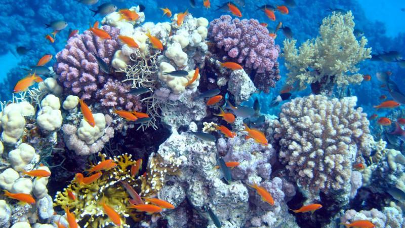 Meraviglie del mondo sommerso su focus nonsolocinema for Immagini coralli marini